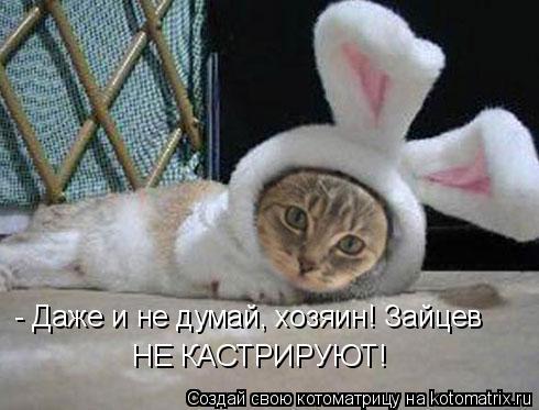Котоматрица: - Даже и не думай, хозяин! Зайцев НЕ КАСТРИРУЮТ!