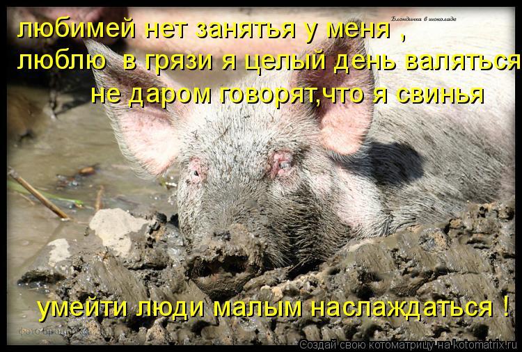 Котоматрица: любимей нет занятья у меня ,  люблю  в грязи я целый день валяться не даром говорят,что я свинья умейти люди малым наслаждаться !
