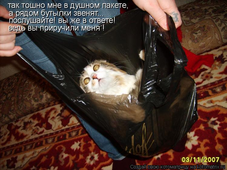 Котоматрица: так тошно мне в душном пакете, а рядом бутылки звенят... послушайте! вы же в ответе! ведь вы приручили меня !