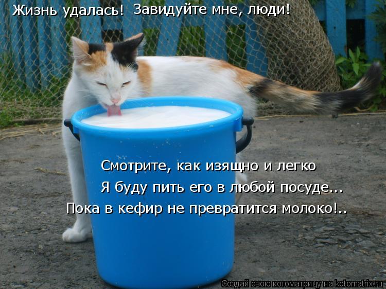 Котоматрица: Жизнь удалась! Завидуйте мне, люди! Я буду пить его в любой посуде... Смотрите, как изящно и легко Пока в кефир не превратится молоко!..