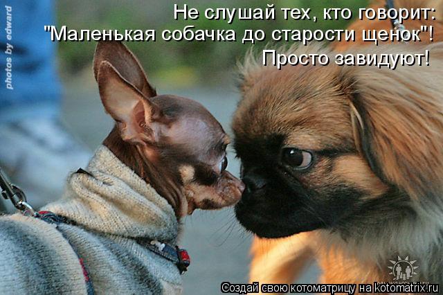 """Котоматрица: Не слушай тех, кто говорит:  """"Маленькая собачка до старости щенок""""!  Просто завидуют!"""