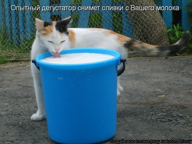 Котоматрица: Опытный дегустатор снимет сливки с Вашего молока