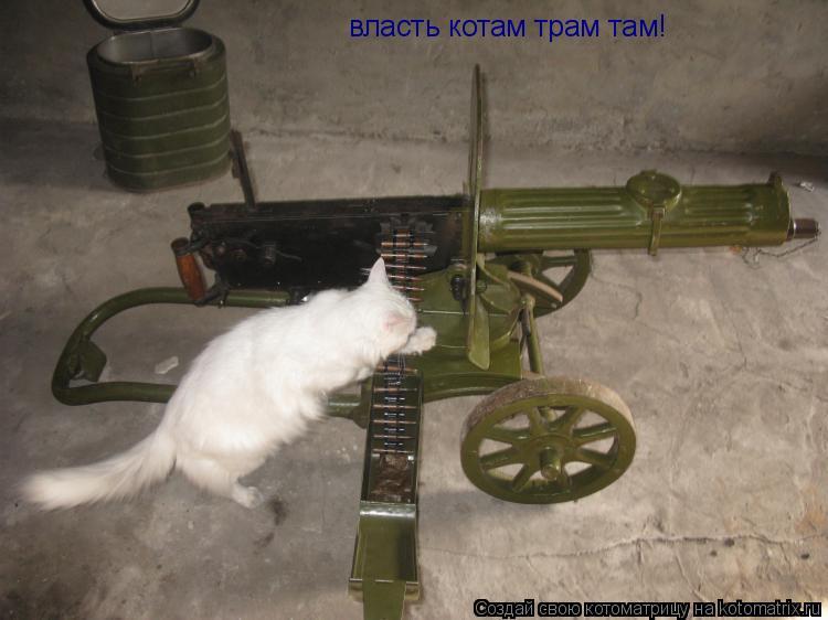 Котоматрица: власть котам трам там!