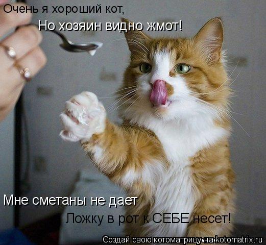Котоматрица: Очень я хороший кот, Но хозяин видно жмот! Мне сметаны не дает Ложку в рот к СЕБЕ несет!