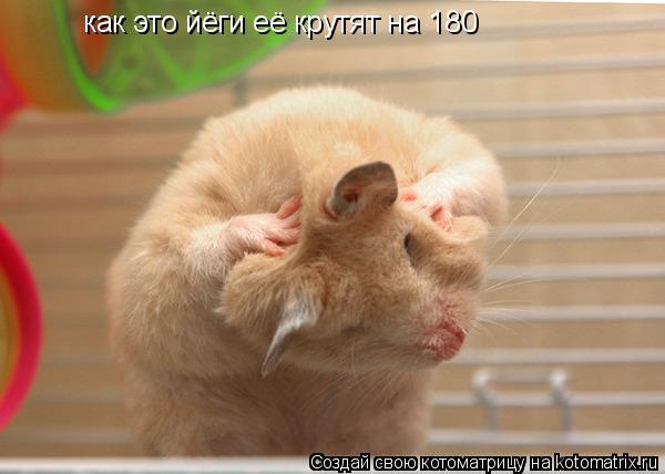 Котоматрица: как это йёги её крутят на 180