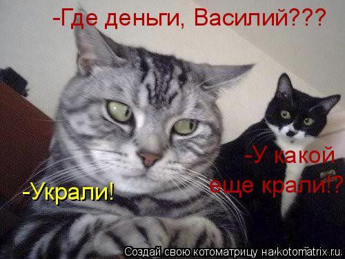 Котоматрица: -Украли! -Где деньги, Василий??? -У какой еще крали!?