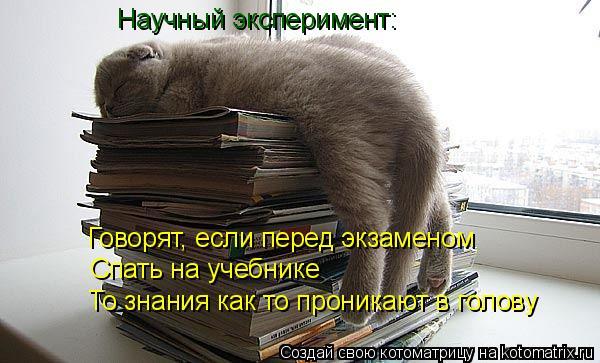 Котоматрица: Говорят, если перед экзаменом  Спать на учебнике То знания как то проникают в голову Научный эксперимент:
