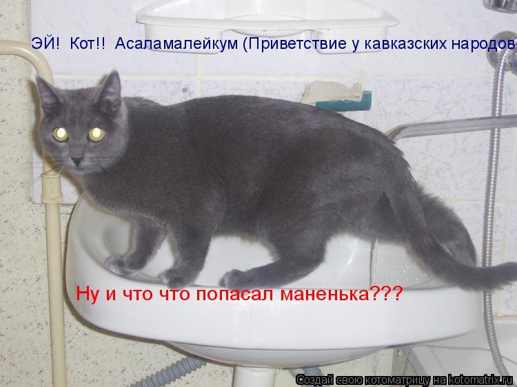 Котоматрица: ЭЙ!  Кот!!  Асаламалейкум (Приветствие у кавказских народов) Ну и что что попасал маненька???
