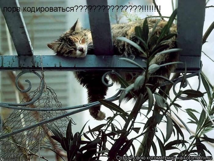 Котоматрица: пора кодироваться???????????????!!!!!!!!