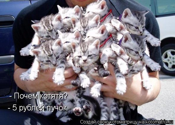 Котоматрица: - Почем котятя? - 5 рублей пучок.