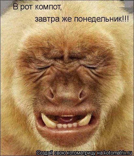 Котоматрица: В рот компот, завтра же понедельник!!!