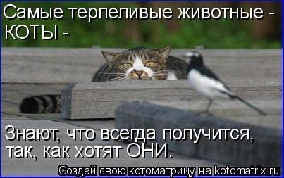 Котоматрица: Самые терпеливые животные - КОТЫ - Знают, что всегда получится, так, как хотят ОНИ.