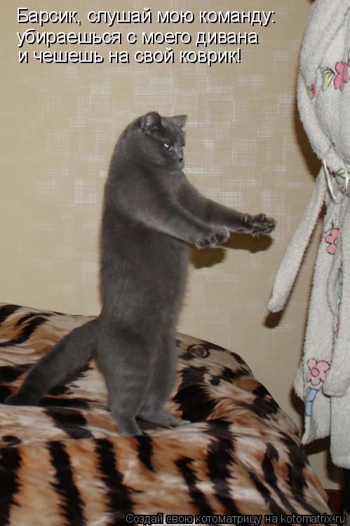 Котоматрица: Барсик, слушай мою команду: убираешься с моего дивана и чешешь на свой коврик!