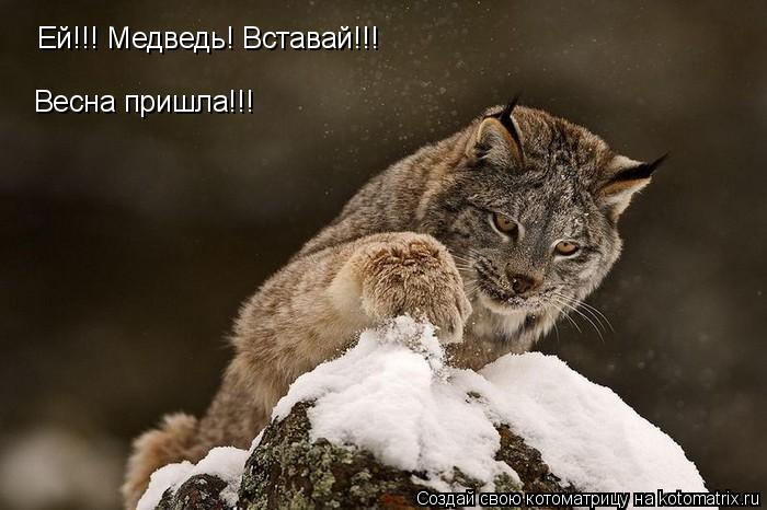 Котоматрица: Ей!!! Медведь! Вставай!!! Весна пришла!!!