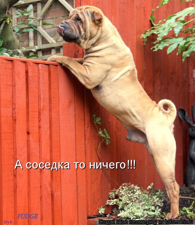 Котоматрица: А соседка то ничего!!!