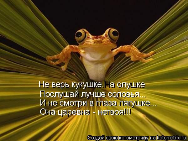 Котоматрица: Не верь кукушке.На опушке Послушай лучше соловья... И не смотри в глаза лягушке... Она царевна - нетвоя!!!
