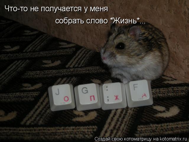 Котоматрица: Что-то не получается у меня  собрать слово *Жизнь*...