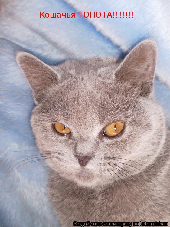 Котоматрица: Кошачья ГОПОТА!!!!!!!