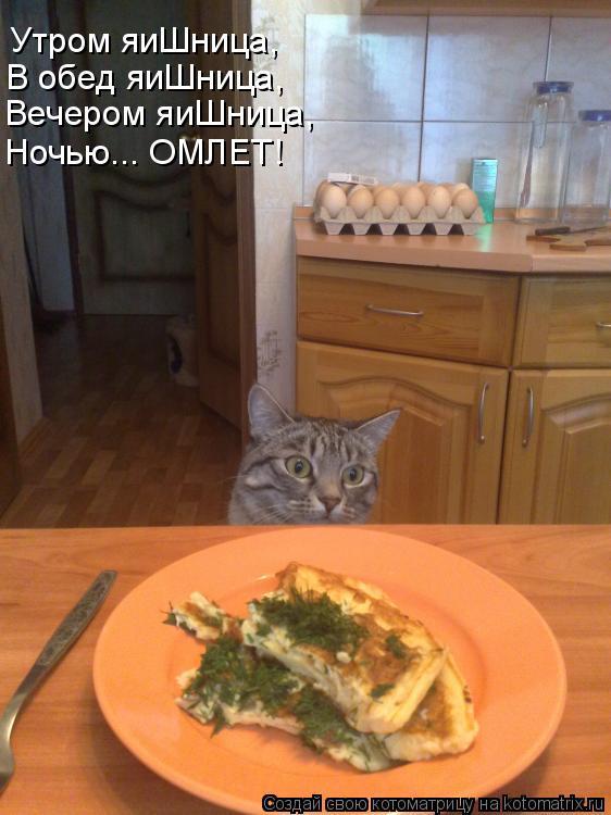 Котоматрица: Утром яиШница, В обед яиШница, Вечером яиШница, Ночью... ОМЛЕТ!