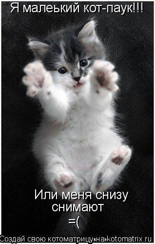 Котоматрица: Я малеький кот-паук!!! Или меня снизу снимают =(