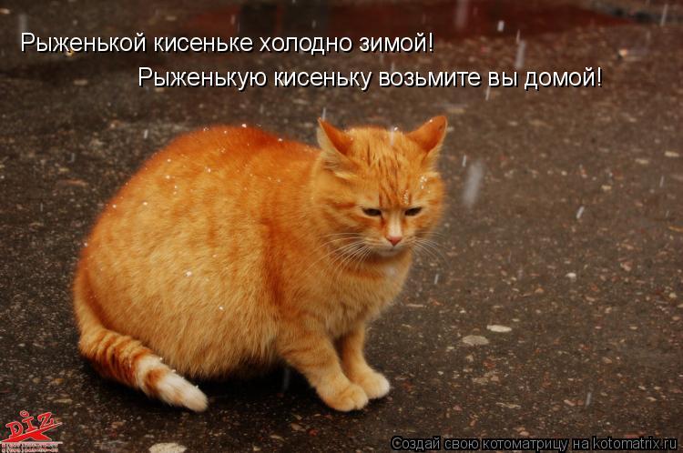 Котоматрица: Рыженькой кисеньке холодно зимой! Рыженькую кисеньку возьмите вы домой!