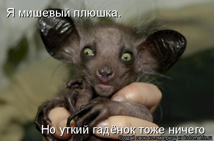 Котоматрица: Я мишевый плюшка.  Но уткий гадёнок тоже ничего