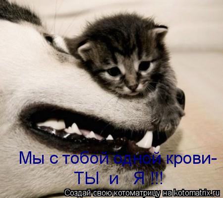 Котоматрица: ТЫ  и   Я !!! Мы с тобой одной крови-