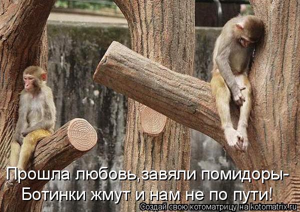 Котоматрица: Прошла любовь,завяли помидоры- Ботинки жмут и нам не по пути!