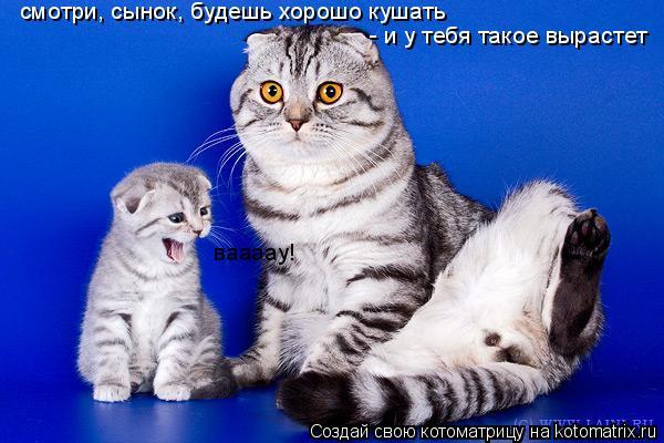 Котоматрица: смотри, сынок, будешь хорошо кушать  - и у тебя такое вырастет ваааау!