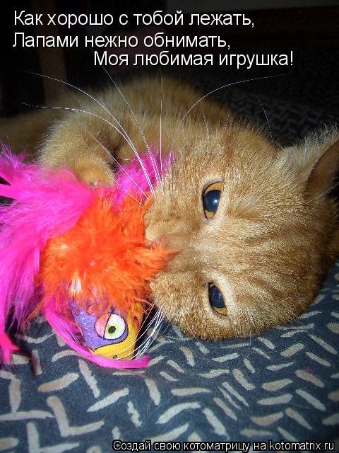 Котоматрица: Как хорошо с тобой лежать, Лапами нежно обнимать, Моя любимая игрушка!