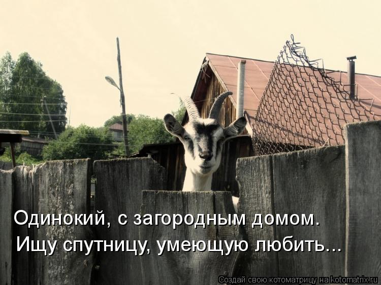 Котоматрица: Одинокий, с загородным домом. Ищу спутницу, умеющую любить...