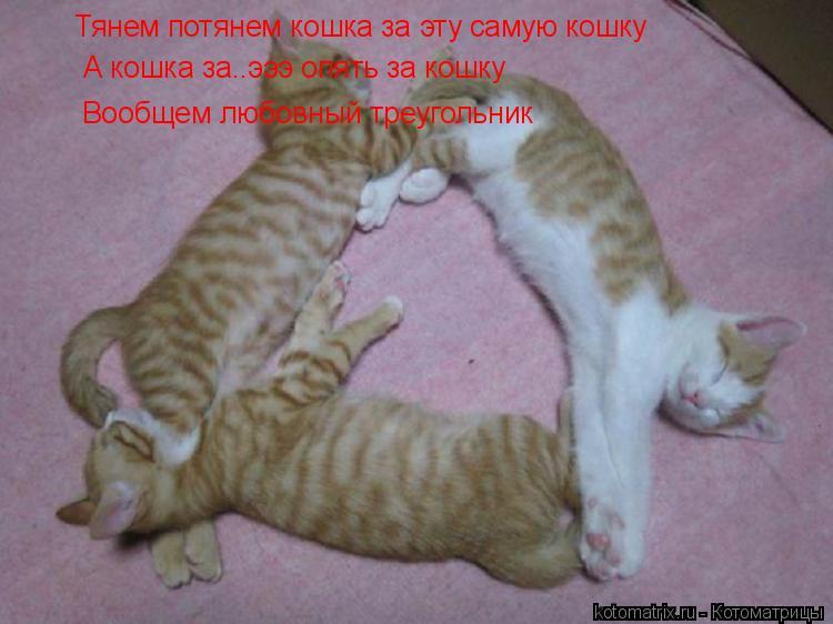 Котоматрица: Тянем потянем кошка за эту самую кошку А кошка за..эээ опять за кошку Вообщем любовный треугольник