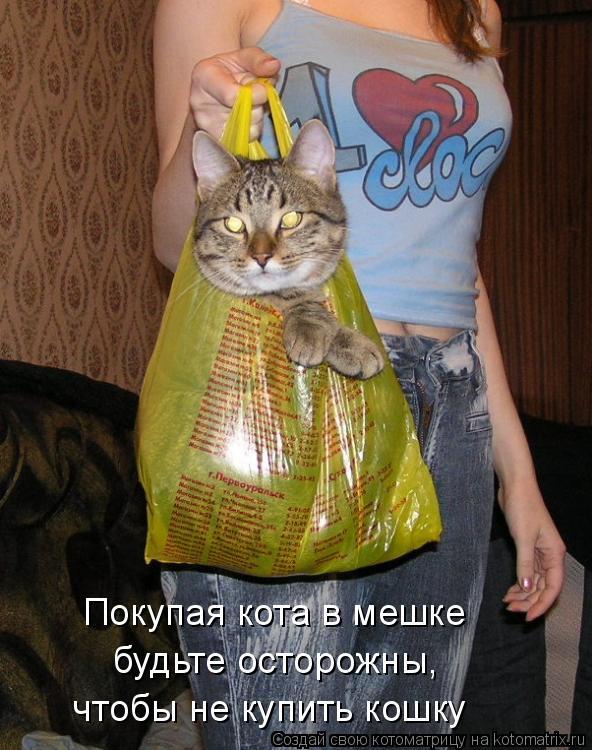 Котоматрица: Покупая кота в мешке  будьте осторожны,  чтобы не купить кошку