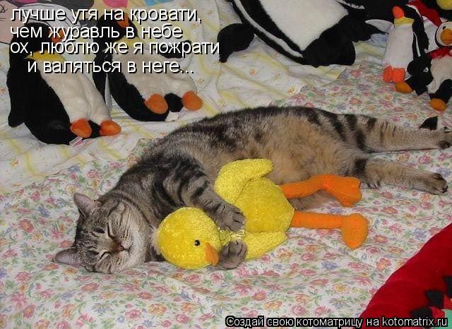 Котоматрица: лучше утя на кровати,  чем журавль в небе ох, люблю же я пожрати и валяться в неге...