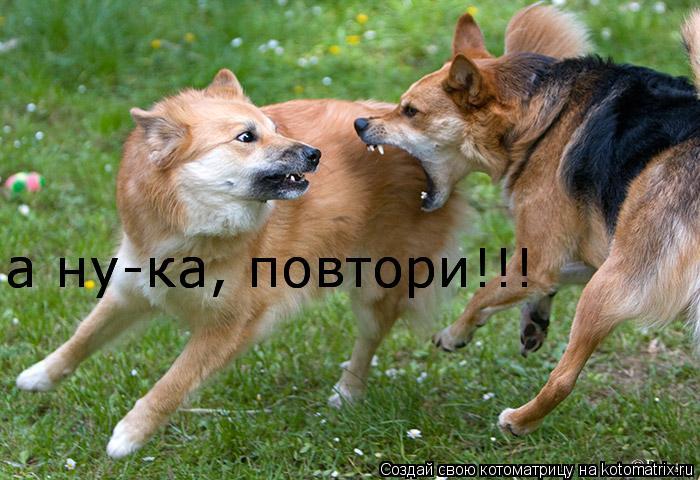 Котоматрица: а ну-ка, повтори!!! а ну-ка, повтори!!!