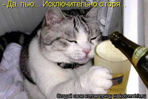 Котоматрица: - Да, пью... Исключительно с горя...