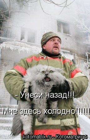 Котоматрица: - Унеси назад!!! Мне здесь холодно!!!!!!!