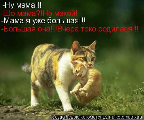 Котоматрица: -Ну мама!!! -Шо мама?!Нэ макой! -Мама я уже большая!!! -Большая она!!!Вчера токо родилася!!!