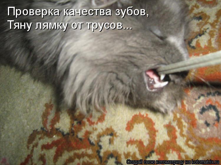 Трусики в зубах 16 фотография