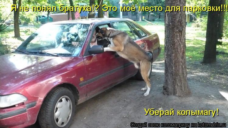 Котоматрица: Я не понял братуха!? Это моё место для парковки!!! Уберай колымагу!
