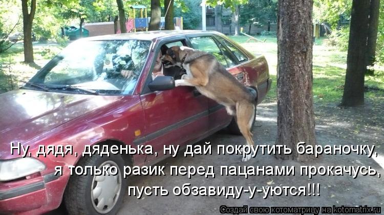 Котоматрица: Ну, дядя, дяденька, ну дай покрутить бараночку,  я только разик перед пацанами прокачусь, пусть обзавиду-у-уются!!!