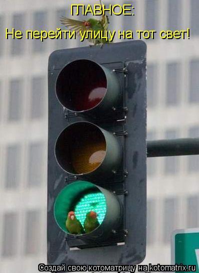 Котоматрица: ГЛАВНОЕ: Не перейти улицу на тот свет!