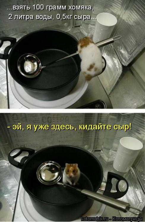 Котоматрица: ...взять 100 грамм хомяка, 2 литра воды, 0,5кг сыра... - эй, я уже здесь, кидайте сыр!