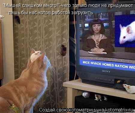 """Котоматрица: """"Мышей слишком много!""""-чего только люди не придумают лишь бы нас-котов работой загрузить..."""