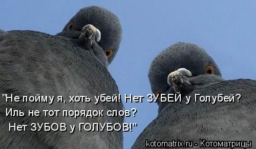 """Котоматрица: """"Не пойму я, хоть убей! Нет ЗУБЕЙ у Голубей?  Иль не тот порядок слов?   Нет ЗУБОВ у ГОЛУБОВ!"""""""