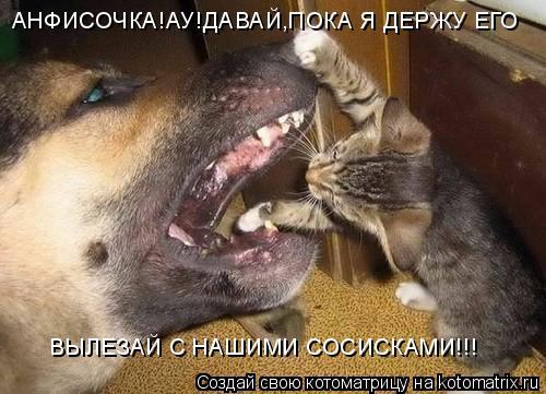Котоматрица: АНФИСОЧКА!АУ!ДАВАЙ,ПОКА Я ДЕРЖУ ЕГО ВЫЛЕЗАЙ С НАШИМИ СОСИСКАМИ!!!