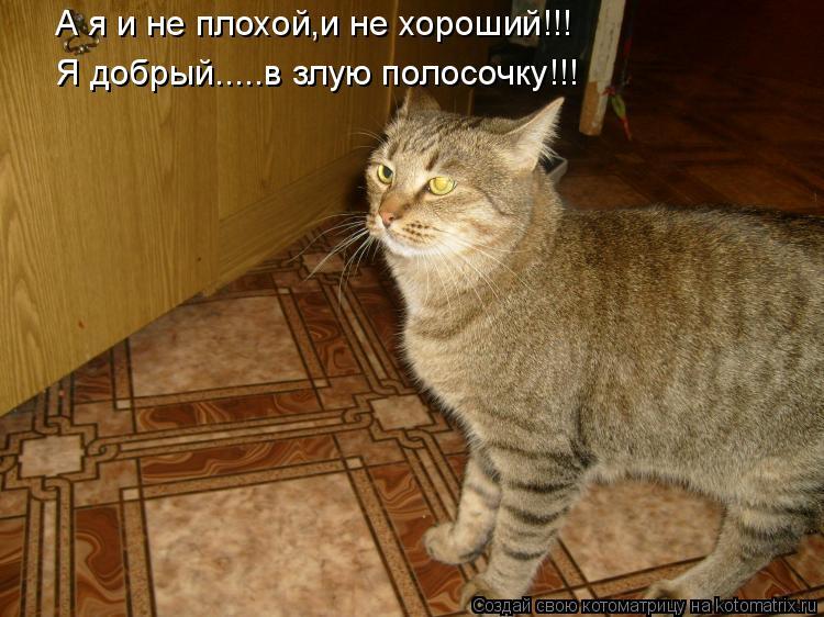 Котоматрица: А я и не плохой,и не хороший!!! Я добрый.....в злую полосочку!!!