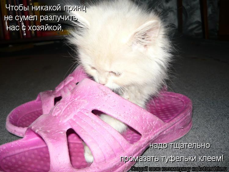 Котоматрица: не сумел разлучить нас с хозяйкой, Чтобы никакой принц промазать туфельки клеем! надо тщательно
