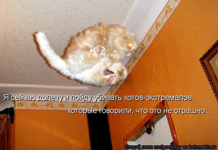 Котоматрица: Я сейчас долечу и пойду убивать котов-экстремалов,  которые говорили, что это не страшно...