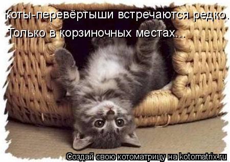 Котоматрица: Коты-перевёртыши встречаются редко. Только в корзиночных местах...